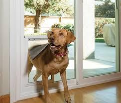 pet doors for glass in devon cornwall