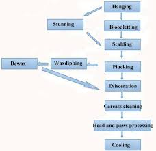 How To Process Chicken Meat Industrially