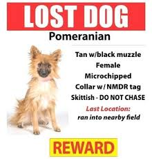 Missing Poster Maker Benvickers Co