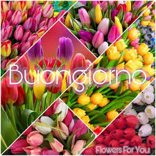 buongiorno #tulipani #link #page #facebook #Flowers #For ...