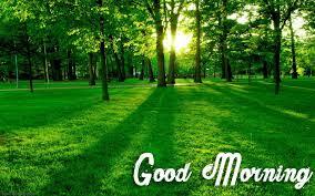 beautiful nature good morning wallpaper 26796
