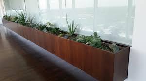 cheap office plants. Succulent Planter Cheap Office Plants