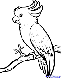 how to draw a atoo hundreds of drawing tuts on this site bird