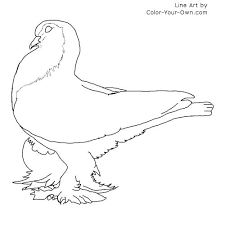 Small Picture Bird Pigeon Coloring Page Lahore