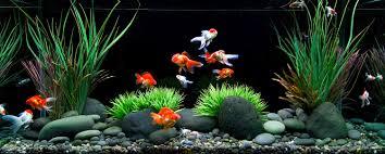 Mario Brothers Aquarium Decorations 17 Best Ideas About Best Fish Tanks On Pinterest Best Aquarium