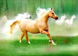 beautiful baby horses wallpaper. Fine Horses 2222x1444 Palomino Horse Wallpapers With Beautiful Baby Horses Wallpaper
