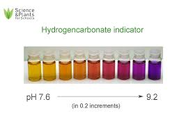 Bicarbonate Indicator Colour Chart Algal Balls Photosynthesis Using Algae Wrapped In Jelly