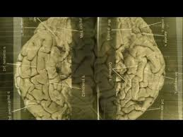 Images of Einstein's brain revealed - YouTube