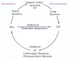 Bacteria And Archaea And The Cycles Of Elements In The