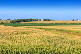 Image result for Picture of the Illinois Prairie