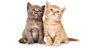 cute cat wallpaper backgrounds. Delighful Wallpaper To Cute Cat Wallpaper Backgrounds F