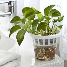 Best Decorative Indoor Plant Pots Contemporary - Interior Design .