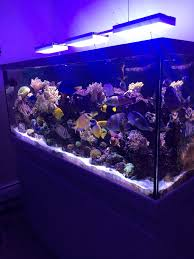 Led Lights For Red Sea Max 250 Red Sea Max S 650 Reef2reef Saltwater And Reef Aquarium Forum
