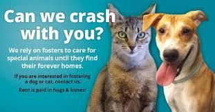 Foster Dogs And Cats Etobicoke Humane Society Toronto