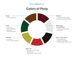 Light Yellow Stool Why Is My Poop Green Stool Colors Explained