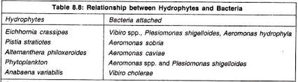 wetland management in essay environment relationship between hydrophytes and bacteria