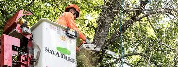 Tree Quotes Savatree Expert Tree Services