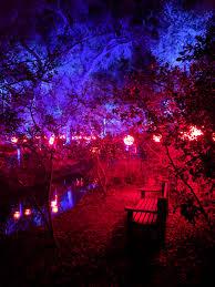Descanso Enchanted Forest Of Lights I Visited The Enchanted Forest Of Light In The Descanso