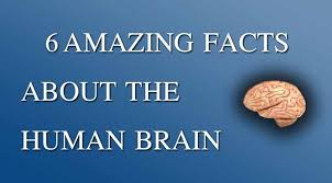 amazing facts about human brain instant essay writing 6 interesting facts about human brain