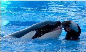 tilikum attack footage. Simple Tilikum The  Intended Tilikum Attack Footage E