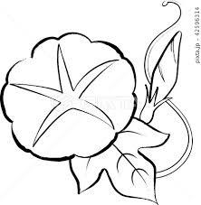 朝顔一輪 夏の花 ぬり絵 手描き風のイラスト素材 42596314 Pixta