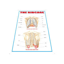 Laminated Anatomical Charts China Anatomy Charts For Wall Laminated Manufacturers