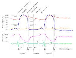 Heart Systolic And Diastolic Chart Wiggers Diagram Wikipedia