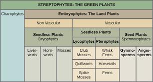 Angiosperm Vs Gymnosperm Venn Diagram Plants Biology 1520