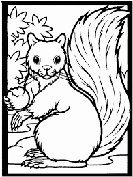 Squirrel Coloring Page For Kids Free Printable Picture
