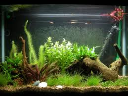 bogwood aquarium