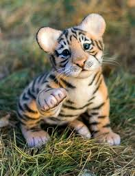 cute baby tiger. Wonderful Baby What A Cute Baby Tiger  Big Cats Pinterest Cute Animals Animals  Beautiful And Inside Baby Tiger U