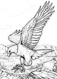 Small Picture Bald Eagle with Sharp Claws Coloring Page NetArt