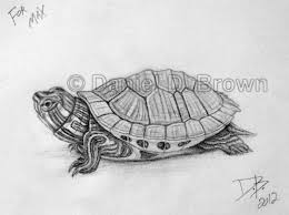 Small Picture turtle Pencil Drawing slider Baby Red Eared Slider Turtle