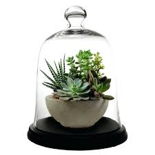 glass dome with base glass dome bell jar cloche with base glass dome with base ikea