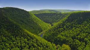 reasons why forests are important mother nature network pine creek gorge