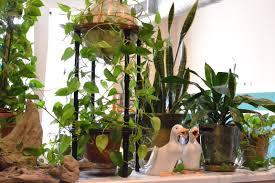 best indoor plants for office. Boma15jpg 1000×750 Houseplants Растения в интерьере Best Indoor Plants For Office