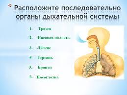 Тема урока Газообмен в легких и тканях Дыхательные движения  Назад