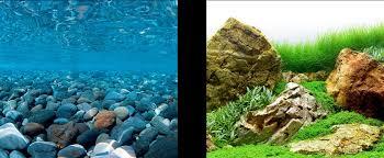 Free Printable Aquarium Backgrounds 1000 Aquarium Ideas
