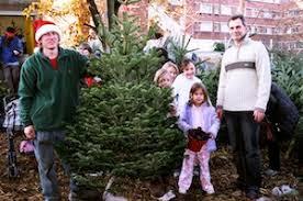 Christmas Tree Putney