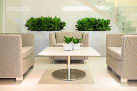 ... Lobby seating plants compacta and aglaonema ...