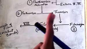 Coagulation Of Blood Flow Chart Easiest Explanation On Blood Clotting Mechanism Youtube