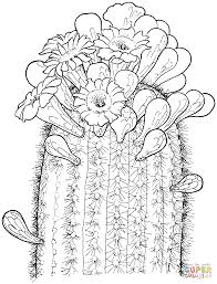 Small Picture Cactus coloring pages Free Coloring Pages
