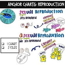 Anchor Charts Sexual Vs Asexual Reproduction 1 Chart 2 Files