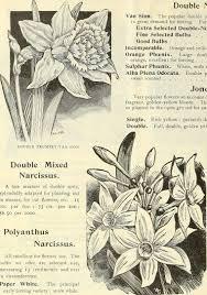 White Paper Flower Bulbs File Dreers Wholesale Price List Plants Bulbs Seasonable