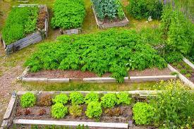 11 perfect raised garden bed kit ideas