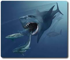 real megalodon shark sightings pictures. Simple Sightings Megalodon Shark Inside Real Sightings Pictures A