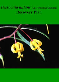 Recovery Plan Impressive Persoonia Nutans RBr Nodding Geebung Recovery Plan NSW