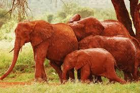 elephant color. Simple Elephant For Elephant Color D