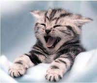 sweet cat love. Plain Cat Sweetcat200x170  Cute Cat Coverage  Kittens Cats Funny Sweet  Adorable Pictures For Sweet Love C