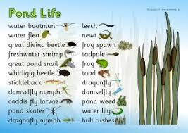 Minibeast Pond Life Primary Teaching Resources Printables